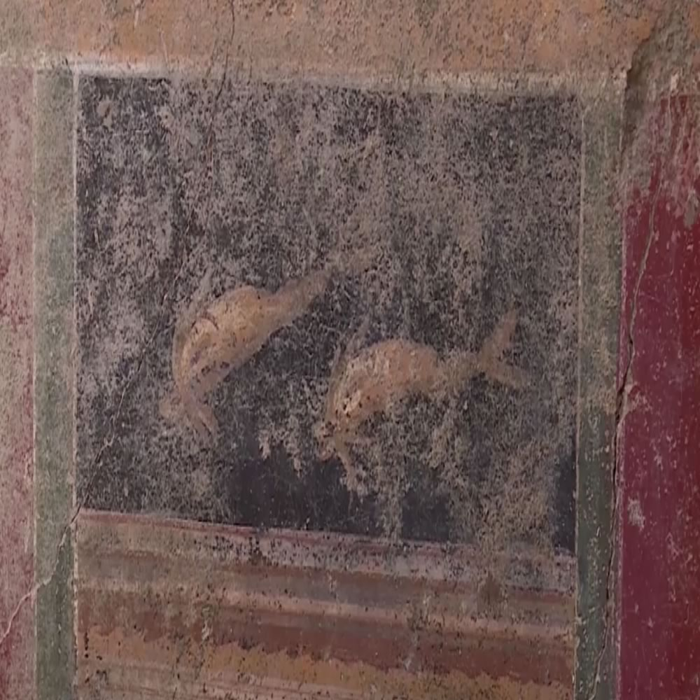 Discovered in Pompeii a new domus renamed «House of the Dolphins»