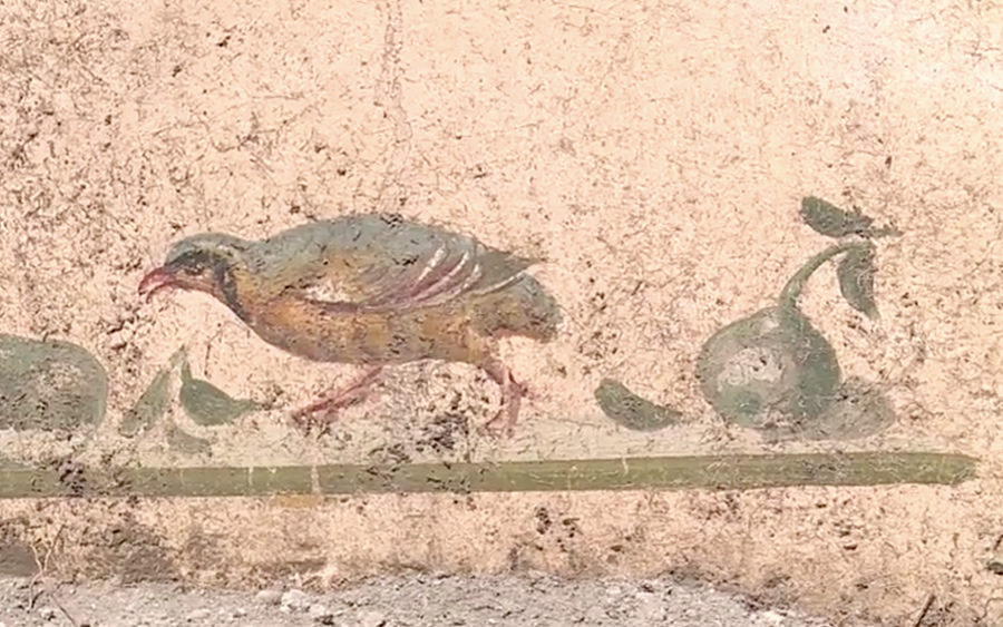 Frescoes of peacocks and birds in the new excavations